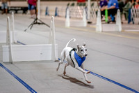 Flyball Competition 05-29 2015-004