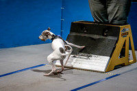 Flyball Competition 05-29 2015-008
