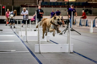 Flyball Competition 05-29 2015-011