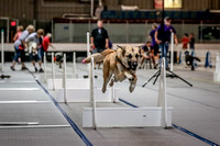 Flyball Competition 05-29 2015-013