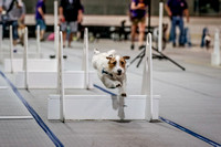 Flyball Competition 05-29 2015-014