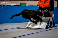 Flyball Competition 05-29 2015-015