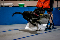 Flyball Competition 05-29 2015-016