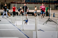 Flyball Competition 05-29 2015-002