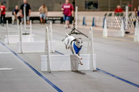 Flyball Competition 05-29 2015-003