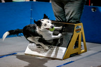 Flyball Competition 05-29 2015-005