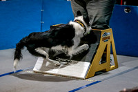 Flyball Competition 05-29 2015-006