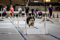 Flyball Competition 05-29 2015-012