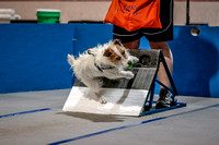 Flyball Competition 05-29 2015-018
