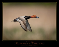 "WATERFOWL WONDERS - 24"" x 30"""