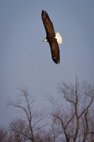 Eagles & Signs of Spring 2011-002