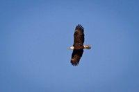 Eagles & Signs of Spring 2011-014