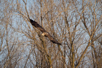 Eagles & Signs of Spring 2011-006