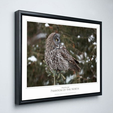Owl Shadow Box Frame
