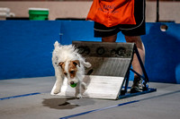 Flyball Competition 05-29 2015-019