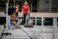Flyball Competition 05-29 2015-001
